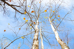 秋天五颜六色的调色板 免版税库存照片