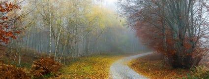 秋天五颜六色的路径 库存图片