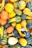 秋天五颜六色的金瓜模式 免版税图库摄影