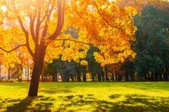 秋天五颜六色的风景在晴朗的秋天风景公园由阳光点燃了 秋天公园在明亮的阳光下 免版税图库摄影