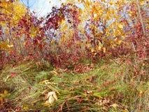 秋天五颜六色的风景 库存图片