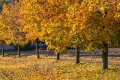 秋天五颜六色的结构树 免版税图库摄影