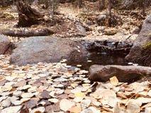 秋天亚斯本在水留给休息小瀑布 免版税库存图片