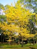 秋天从事园艺京都本质ninnaji寺庙 库存图片
