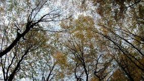 秋天从冠上的底部的森林视图 股票视频