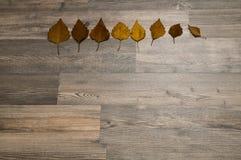 秋天从淡黄色通过到深黄对木背景 改变季节的概念 免版税库存照片