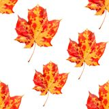 秋天例证留给模式无缝的向量 库存照片