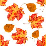 秋天例证留给模式无缝的向量 免版税库存图片
