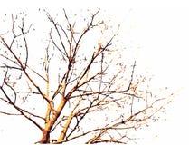 秋天例证结构树 免版税库存图片