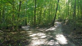 秋天供徒步旅行的小道 库存照片