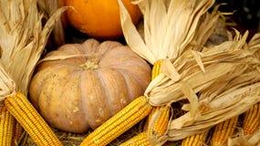 秋天假日南瓜和玉米,感谢给 免版税库存照片
