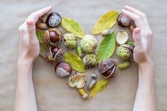 秋天假日感恩贺卡的平的位置构成 橡子,叶子,栗子用以a的形式妇女手 免版税库存照片