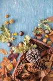 秋天假日贺卡的平的位置构成 杉木锥体,橡木分支,橡子,叶子,在一个木箱的栗子在Th 库存图片