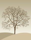 秋天偏僻的结构树 皇族释放例证