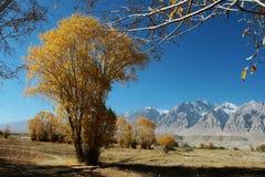 秋天偏僻的结构树 库存照片