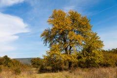 秋天偏僻的结构树 免版税库存图片