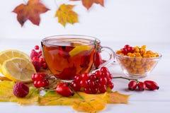 秋天健康饮料概念 茶用秋天莓果海鼠李、荚莲属的植物、玫瑰果、花揪和秋天叶子 饮料 免版税图库摄影
