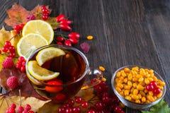 秋天健康饮料概念 茶用秋天莓果海鼠李、荚莲属的植物、玫瑰果、花揪和秋天叶子 饮料 免版税库存图片