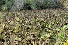 秋天充分草地的干花和凋枯的叶子 库存图片