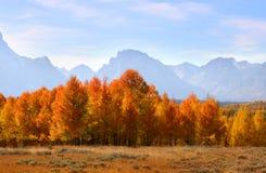 秋天全部tetons 库存图片
