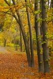 秋天公园、树和很多叶子 图库摄影