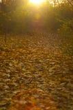 秋天公园、树和很多叶子 免版税库存图片