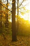 秋天公园、树和很多叶子 库存照片