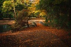 秋天公园令人愉快的风景有桥梁和池塘的,秋天o 库存图片