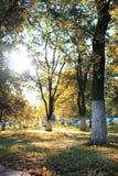 秋天公园叶子太阳 库存图片