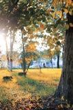 秋天公园叶子太阳 免版税库存图片