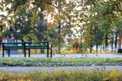 秋天公园叶子太阳 免版税库存照片