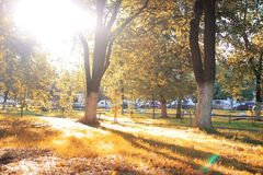 秋天公园叶子太阳 免版税图库摄影