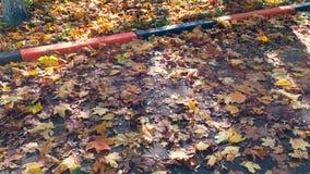 秋天公园在一个晴天 股票录像