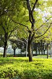 秋天公园在多云天气的早晨 图片秋天公园 9月风景在公园 阴暗天气 公园胡同 库存图片