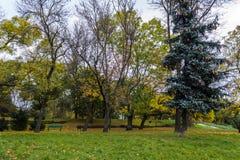 秋天公园在市罗兹,波兰 免版税图库摄影