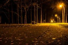 秋天公园在晚上 发光的光 有秋叶的路 免版税库存照片