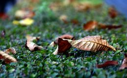 秋天公园在索非亚,保加利亚9月 2017年 免版税库存图片