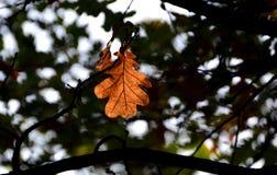 秋天公园在索非亚,保加利亚9月 2017年 库存照片