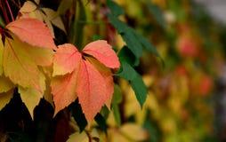 秋天公园在索非亚,保加利亚9月 2017年 库存图片
