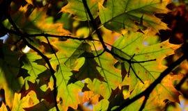 秋天公园在索非亚,保加利亚9月 2017年 免版税库存照片