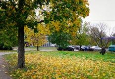 秋天公园在维堡,俄罗斯 图库摄影
