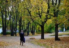 秋天公园在维堡,俄罗斯 免版税图库摄影