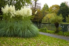 秋天公园在萨里,英国 免版税库存图片