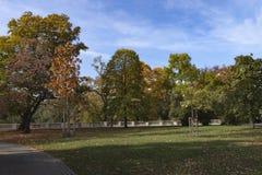 秋天公园树和蓝天 免版税库存照片