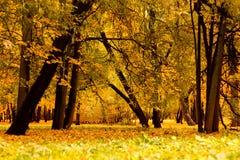 秋天公园树黄色叶子 免版税库存图片