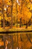 秋天公园槭树池塘 免版税库存照片