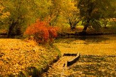 秋天公园池塘树 库存图片