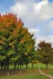 秋天公园结构树 库存照片