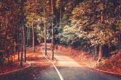 秋天公园路背景 美好的横向 库存图片