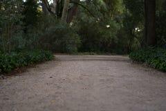 秋天公园路黄色 库存照片